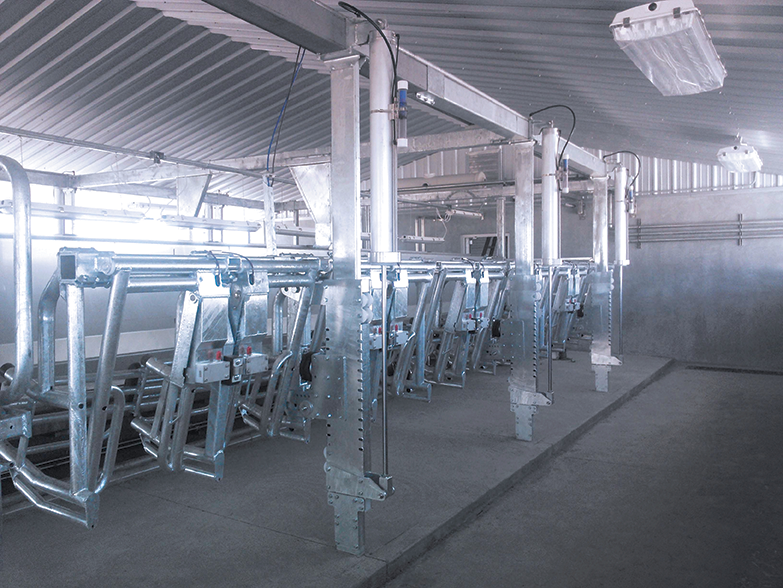 Index Stall | Dairy Parlor Equipment | DairyStalls.com
